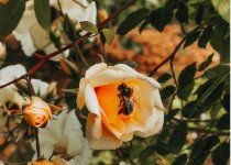 Trésors de la ruche : prendre soin de sa peau grâce aux abeilles